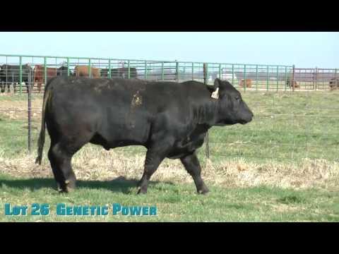 Lot 26  Genetic Power