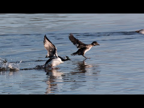 Wildlife And Sport Fish Restoration Programs - NDGNF - 04-23-19