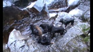 NZ Winter Wild Pig Hunts