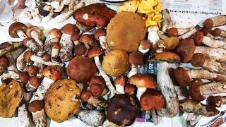 Собираем грибы 2019 октябрь