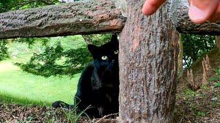 恥ずかしがり屋の黒猫ちゃん、道路脇に逃げるもゴロンゴロン転がるようになった