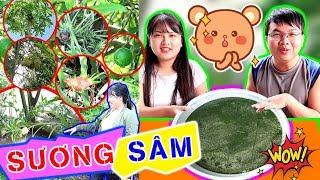 BUI VLOGS | Bẻ lá sâm để làm sương sâm ăn quá đã sẽ #Ntn và thăm vườn trái cây độc lạ nhà chú 9