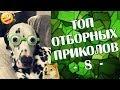 ПРИКОЛЫ 2019 Топ Отборных Приколов #8 │Ржака Юмор Угар Joke Humor│