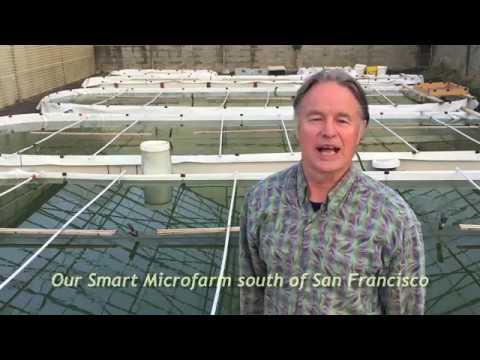Spirulina Smart Microfarm
