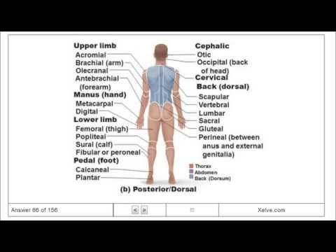 Introduction to Human Anatomy and...