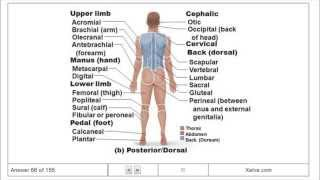 Introduction to Human Anatomy and Physiology - 1 The Human Body: An Orientation - Flashcards