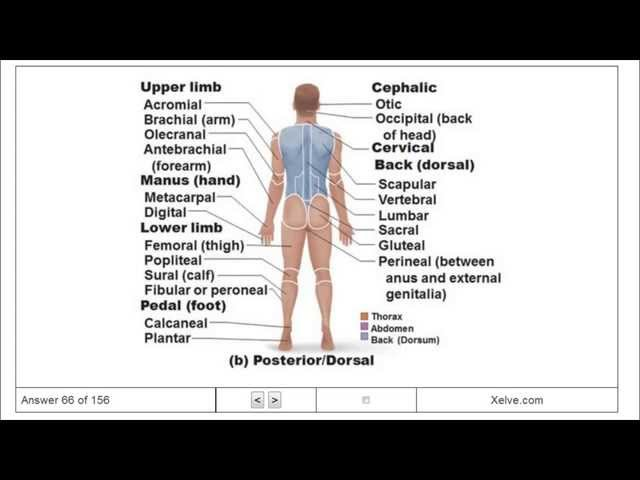 Introduction To Human Anatomy And Physiology 1 The Human Body An