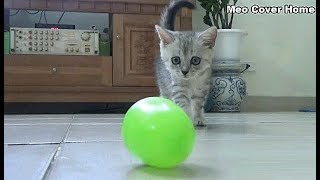 Kittens Catch  Up With Ball 2019