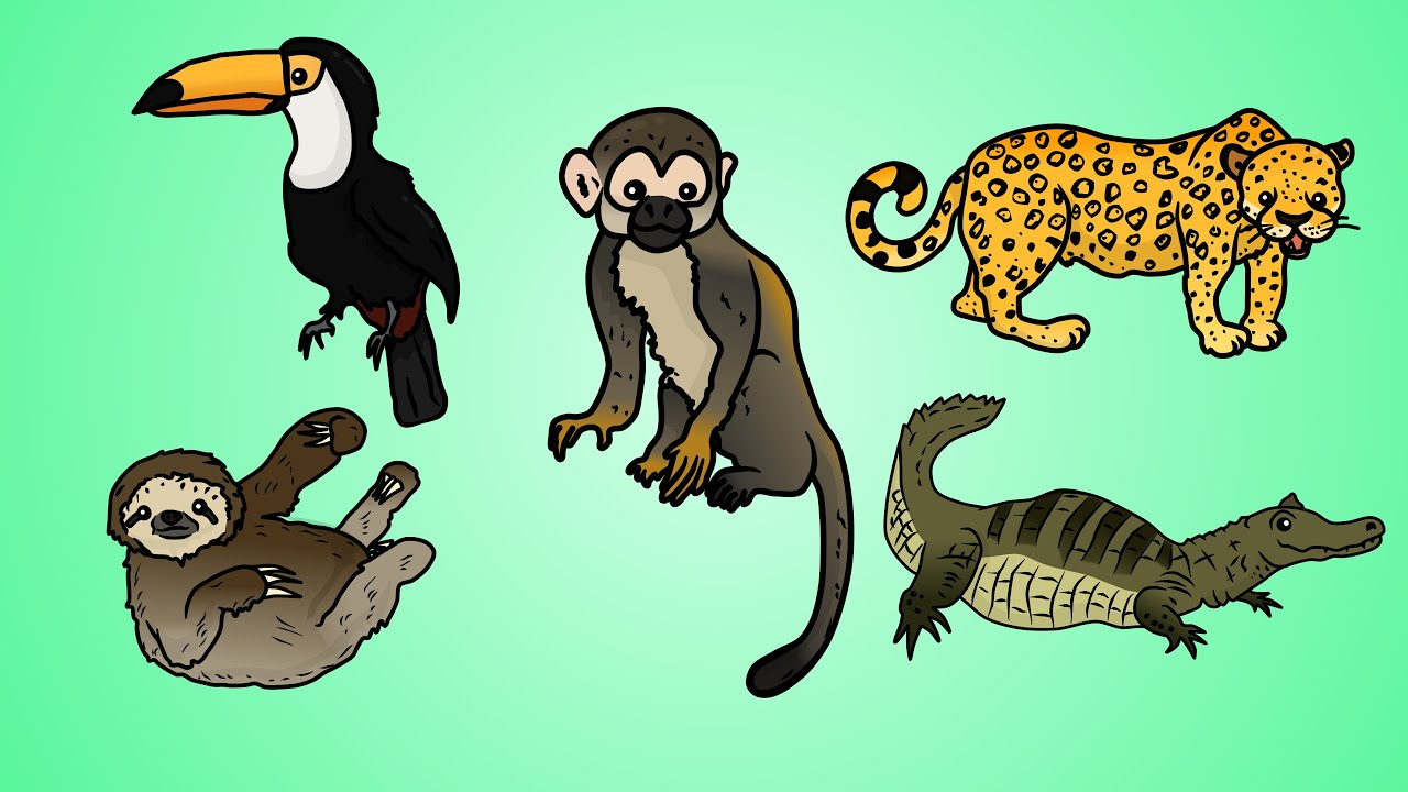 Draw Five: How to Draw Jungle Animals - YouTube