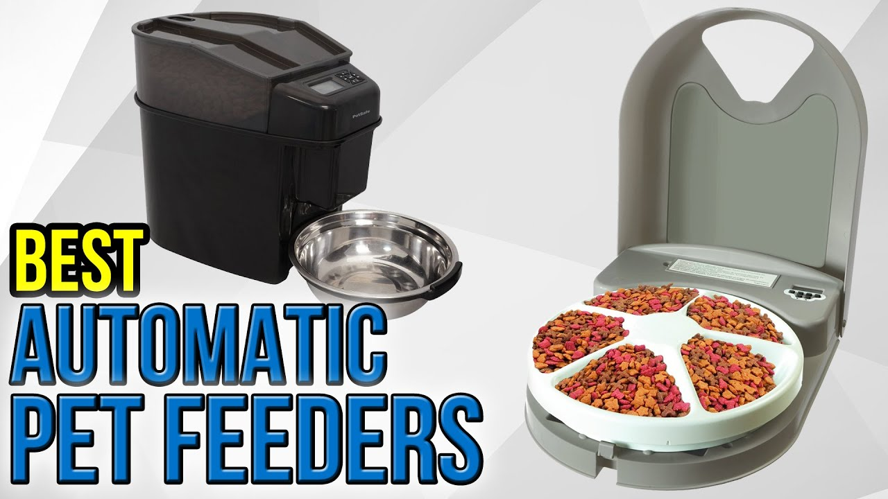 out index automatic ensuring and feeder locked ec pet fair dog feeders pets a share multiple feeding
