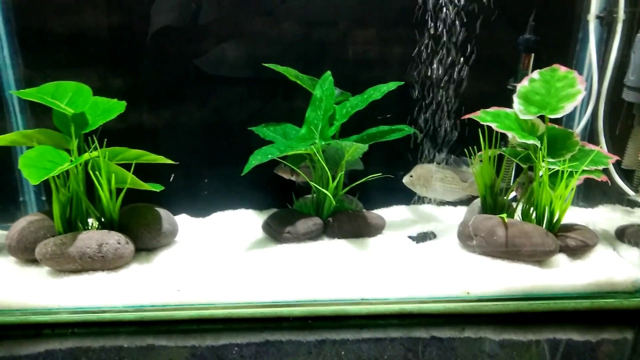 How to solve cloudy water in aquarium in hindi youtube for My fish tank water is cloudy