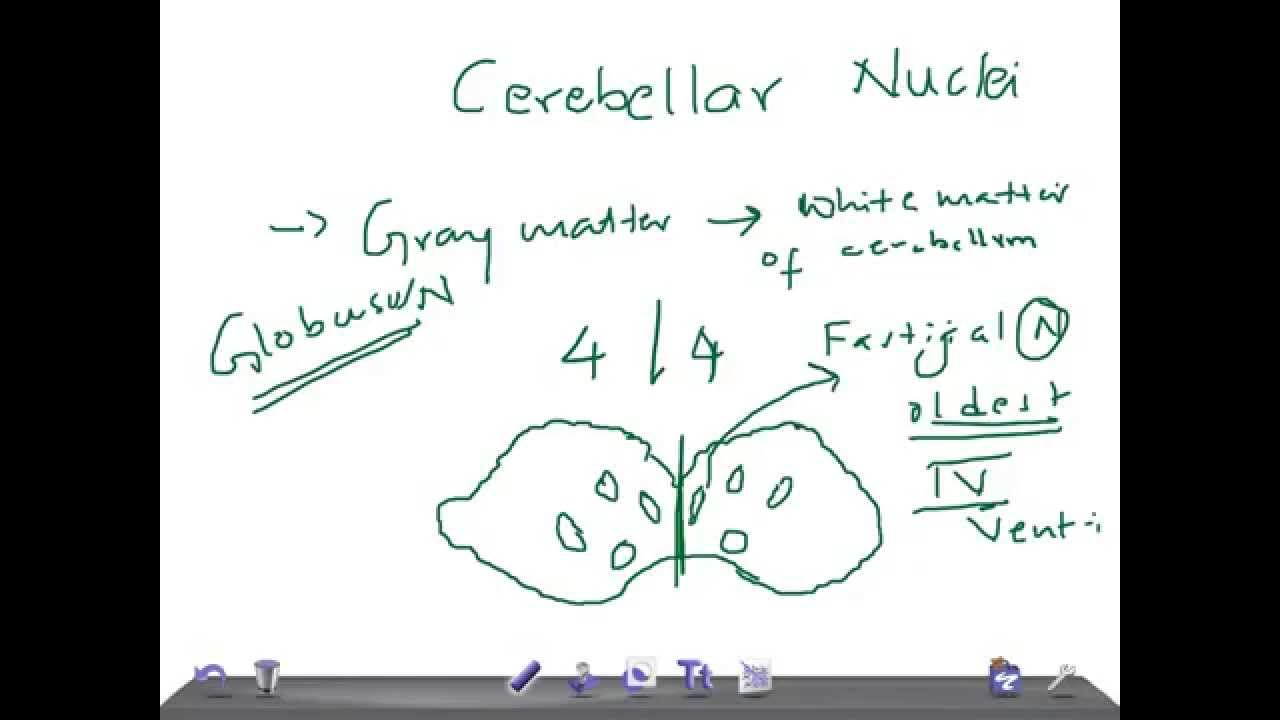Medical Video Lecture, PHYSIOLOGY: Cerebellar Nuclei - YouTube