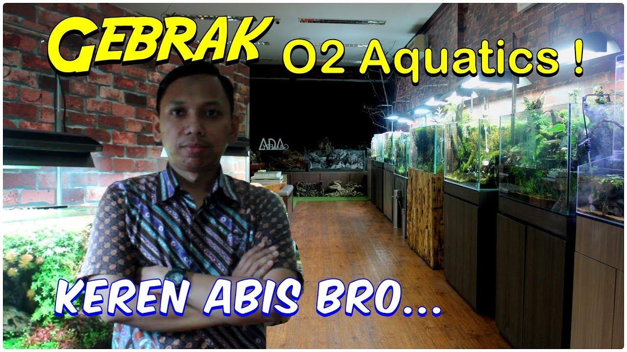 """Visit Aquascape Gallery """"O2 AQUATICS"""" - Wow, banyak banget ..."""