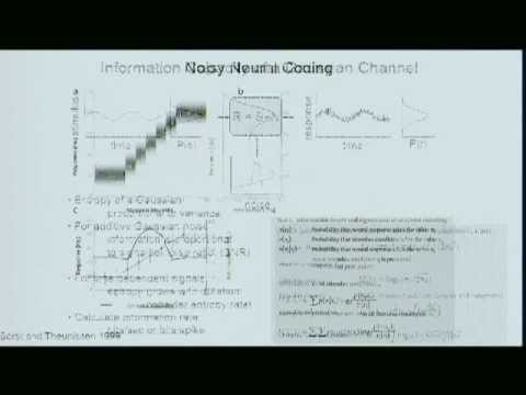Information Theory and Neural Coding - Part 1, by Adam Schneider