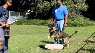 Jacksonville Dog Training Class With K9 Neko