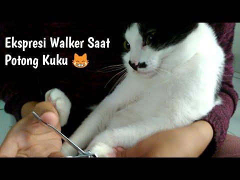 Cara Memotong Kuku Kucing, Bersama Walker 😹