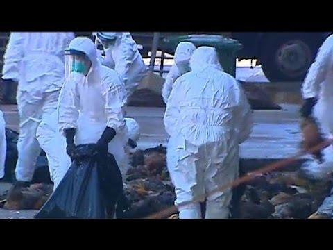 Hong Kong culls 15,000 chickens after bird flu alert