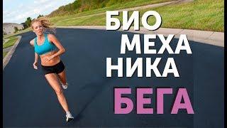Биомеханика бега: анатомия стоп, фазы бега, рекомендации по бегу.