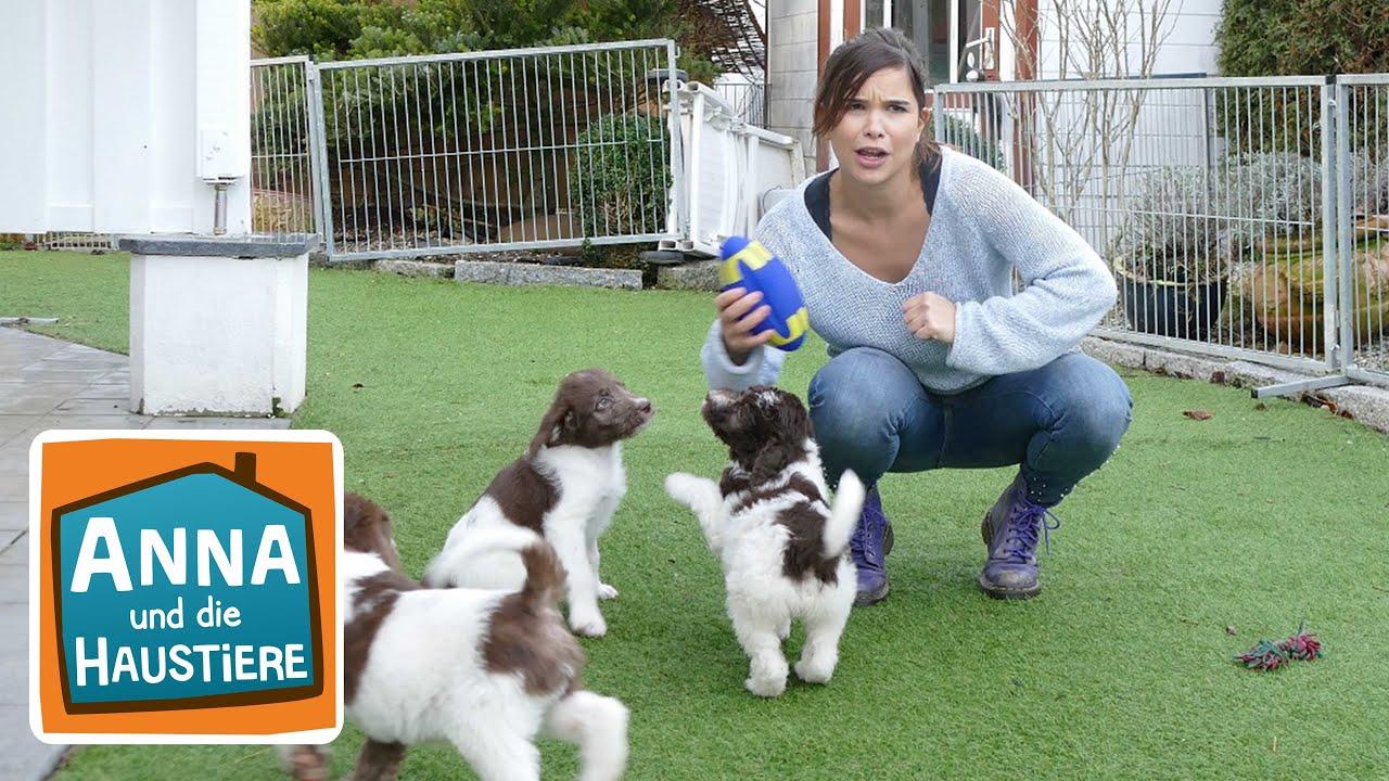 Labradoodle Information Fur Kinder Anna Und Die Haustiere Youtube