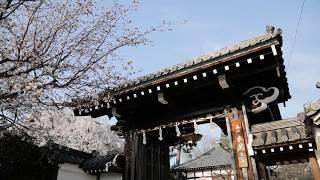 【WEB動画】2018年 春 オリジナル映像「本満寺」篇 そうだ 京都、行こう。