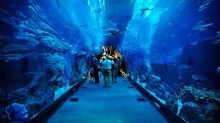 Самый большой океанариум (Aquarium of the Dubai mall)(Самый большой океанариум (Aquarium of the Dubai mall) http://youtu.be/MUtdlMzFGWg Аквариум содержит 10 млн. литров воды и насчитывает..., 2014-02-15T08:52:58.000Z)