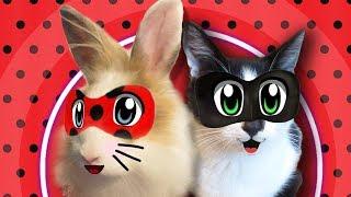 ЛЕДИ БАФ И СУПЕР-КОТ МАЛЫШ В ПОИСКЕ КНИГИ! КРОЛИК БАФФИ И КОТ МАЛЫШ ИГРАЮТ в LadyBug and Cat Noir