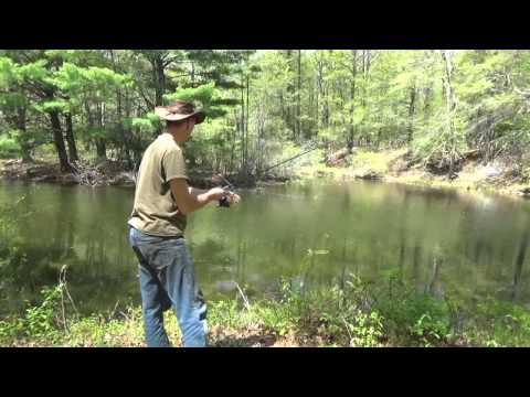How To Catch Sunfish & Bluegill From Small Lake Or Pond