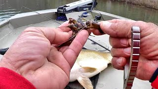 BIG FISH DESTROYS CRAWFISH!!!