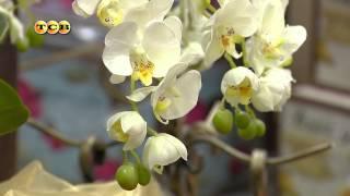 Искусственные цветы в интерьере(, 2014-12-03T09:45:49.000Z)