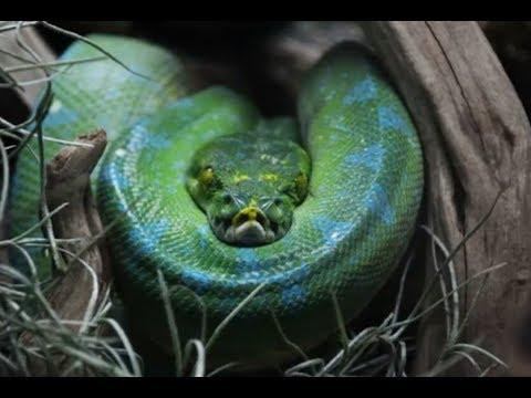 youtube snake island brazil