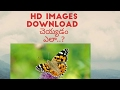 How to download HD images in mobile  Telugu