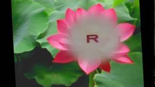 O radha tere bina -Radha Ka sangam.wmv