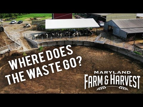 What Happens to Cow Manure? | Maryland Farm & Harvest