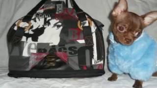 Стильные сумки переноски для животных  Смотреть до конца!