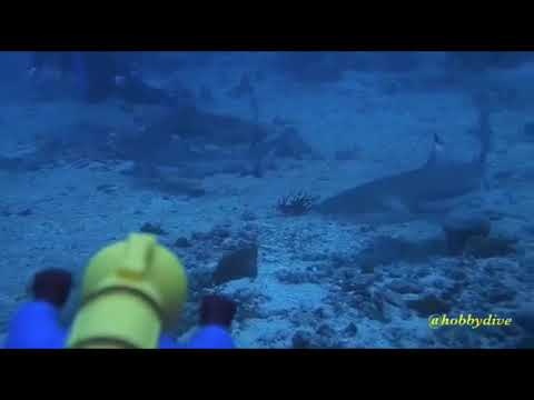 Aquaman ~ Diving Morotai Clip with Hobby Dive