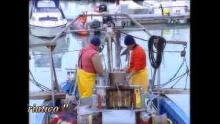 Trani - La perla del mediterraneo