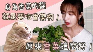 原來香菜這麼好!身為香菜的貓就是要吃香菜啊!貓咪會吃嗎?|貓與香菜 貓咪吃什麼