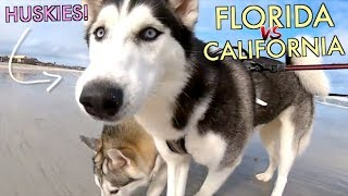 Florida Husky vs. California Husky   HUSKIES AROUND THE WORLD! (Ft. Sixty Formula & Meeler Husky)
