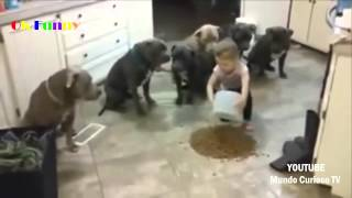 Funny animals✤FUNNY VIDEOS Try not to laugh Funny pranks Best funny epic fails 2015