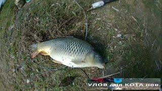ТОП клев Карп Сазан снасти просто какую приманку весной Апрель карповая рыбалка закормил на 2 дня