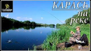 Ловля карася на реке. Рыбалка на фидер. Июль. (LiveFishing)