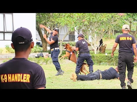 How To Train Canine K9 Belgian Malinois Dogs
