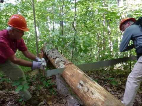 cutting tree Sound Effect
