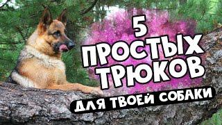 #Дрессировка: учим трюки с собакой