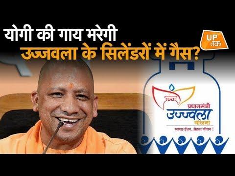 योगी की गाय भरेगी उज्जवला के सिलेंडरों में गैस ? | UP Tak