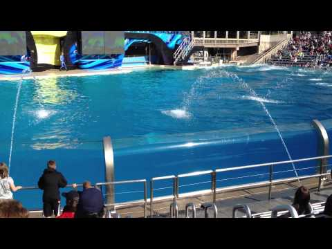 Seaworld - Killer Whale Show, iPhone and camera get wet