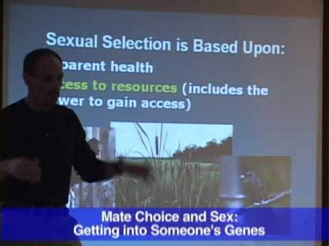 Mate Choice and Sex: Getting Into Someone's Genes