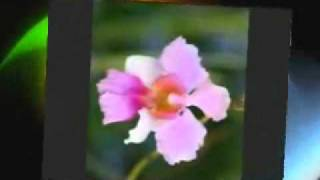 i Love you love song with tamil(en idhayathi therudi shenravale) www.spmmobiles.blogspot.com.wmv