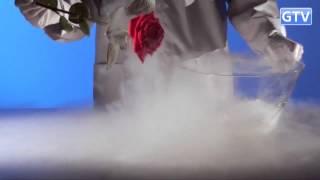 Роза и криогенная заморозка - опыты с жидким азотом