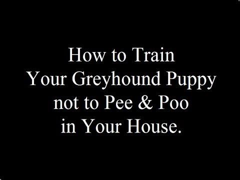 Potty Training Italian Greyhound Puppies  - FREE MINI Course Italian Greyhound Puppies
